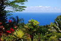 Tropical paradise hana road maui hawaii scenic view of the beautiful in with blue ocean in the backside and colorful flowers Royalty Free Stock Images