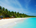 Tropical paradise maldives coconut palms along white beach turquoise sea Stock Images