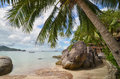 Tropical paradise palm tree closeup and beautiful sandy beach sea behind it Royalty Free Stock Image