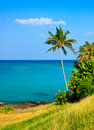 Tropical paradise, palm tree by the ocean Royalty Free Stock Photography