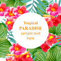 Tropical Paradise vector floral round card. Summerl template design with palm leaves and exotic flower Royalty Free Stock Photo
