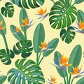 Tropical pattern with bird of paradise flowers. Vector seamless texture.