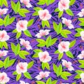 Tropical pattern with white hibiscus flowers Royalty Free Stock Photo
