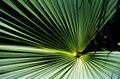 Tropical plant leaves, Reunion Island Stock Images