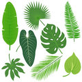Tropical plant leaves vector collection Royalty Free Stock Photo