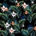 Tropical plants, exotic flowers and leaves seamless pattern on a white background. Vector illustration. Tropical lilies. Royalty Free Stock Photo