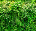 Tropical plants green background lush natural foliage Royalty Free Stock Images