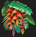 Tropical plants and Heliconia flowers