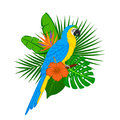 Tropical plants leaf flower arrangement with blue yellow macaw Royalty Free Stock Photo