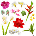 Tropical plants leafs and flowers set of isolated Stock Image