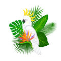 Tropical plants leaves flower arrangement with cockatoo Royalty Free Stock Photo