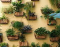 Tropical Plants In Planters In Cuba Royalty Free Stock Photo