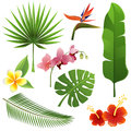 Tropical plants set of leaves and flowers Stock Images