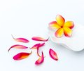 Tropical plumeria in white plate Royalty Free Stock Photography