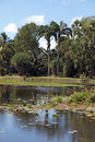 Tropical pond Royalty Free Stock Image