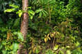 The tropical rain forest Royalty Free Stock Photo
