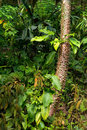 The tropical rain forest Royalty Free Stock Images