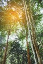 Tropical Rain forest Landscape Royalty Free Stock Photo
