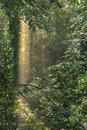 Tropical rain forest, trees in sunlight and mist Royalty Free Stock Photo