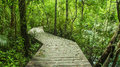 Tropical rainforest in asia with wood walk way, Krabi, Thailand Royalty Free Stock Photo