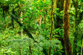 Tropical rainforest Royalty Free Stock Photo