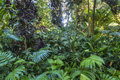 Tropical rainforest landscape in flamingo gardens florida Stock Image