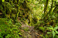 Tropical rainforest in the National Park, Ecuador Stock Photos