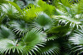 Tropical Rainforest Palm Backg...
