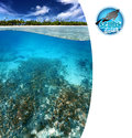 Tropical reef view of with copy space Royalty Free Stock Photos