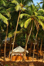 Tropical resort under coconut palm Royalty Free Stock Photography