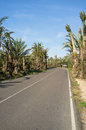 Tropical road lined by many palm trees Stock Images