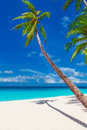 Tropical sand beach with palm trees summer vacation vertical ph photo Stock Photography