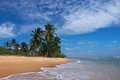 Tropical sandy beach with palm trees Stock Images