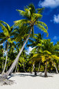 Tropical sandy beach with palm trees Royalty Free Stock Photo