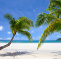 Tropical scene Stock Photography