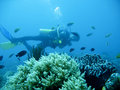 Tropical scuba diving adventure Stock Photography
