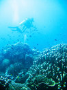 Tropical scuba diving adventure Stock Images