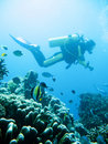 Tropical scuba diving adventure Royalty Free Stock Photo