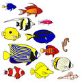 Tropical sea fish species colorful with copy space Royalty Free Stock Image