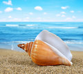 Tropical sea shell Royalty Free Stock Photo