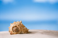 Tropical sea shell on white Florida beach sand under the sun li