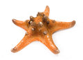 Tropical sea star Stock Image
