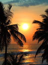 Tropical sea sunset and palms Royalty Free Stock Photo