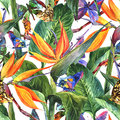 Tropical seamless pattern with exotic flowers and butterflies Stock Photos