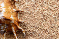 Tropical seashell on sand backgrounds and textures arranged as background close up shot Royalty Free Stock Photo