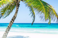 Tropical seaside view and palm trees over turquoise sea at exotic sandy beach in Caribbean sea Royalty Free Stock Photo