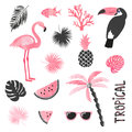 Tropical set in pink and black colors. Flamingo, toucan, watermelon, palm, leaves.