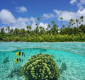 Tropical shore with coral and fish underwater coconut trees of an islet in the lagoon of huahine split view above below Royalty Free Stock Photos