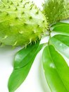 Tropical soursop fruits with green leaves Stock Images
