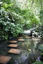 Tropical Spice Garden Stock Photo
